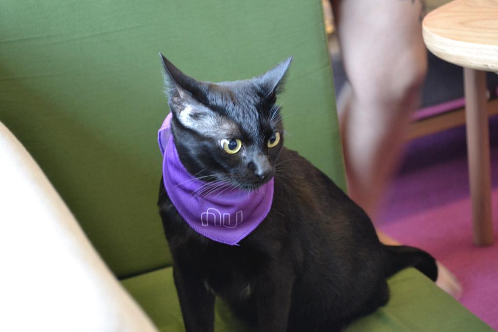 Gato preto com uma bandana roxa do Nubank no pescoço