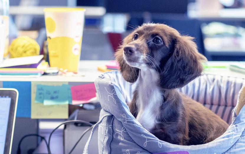 Cachorro filhote sentado em sua caminha, sobre uma mesa de trabalho