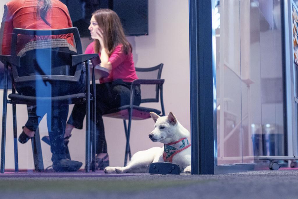Cachorro branco deitado ao pé de uma porta de vidro. Ao fundo, pessoas sentadas em uma mesa de reunião