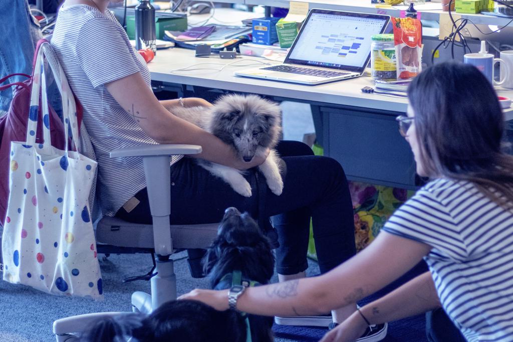 Duas jovens conversando, cada uma fazendo carinho em um cachorro. Uma delas está sentada em uma cadeira, em frente ao computador, com o cachorro no colo. A outra está no chão, fazendo carinho em outro cachorro