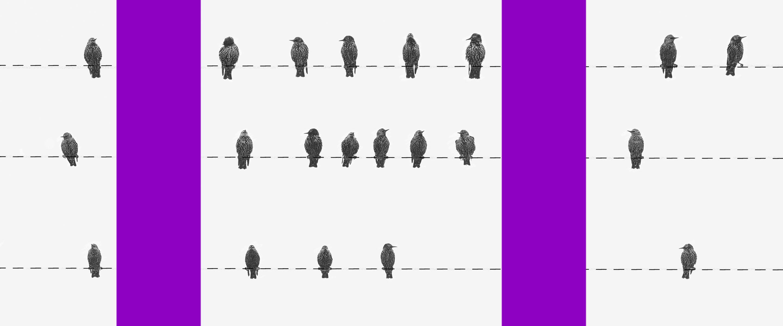 Cadastro Positivo: colagem com pássaros sobre linhas pontilhadas na horizontal e colunas roxas na vertical