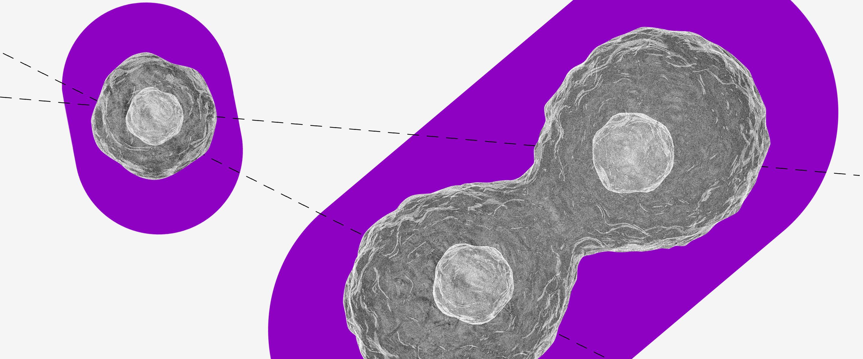Poupança: uma colagem de célula no microscópio sobre um fundo roxo.