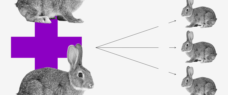 O que é contrato social: dois coelhos unidos por um sinal de mais. Deles saem três flechas que apontam para outros três coelhos menores