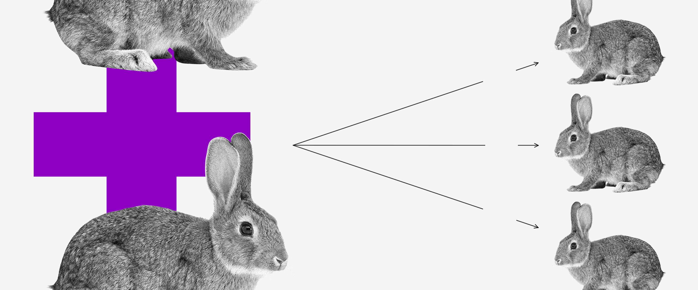 Economia comportamental: dois coelhos com um sinal de mais entre eles. Três setas saem deles apontando para outros três coelhos