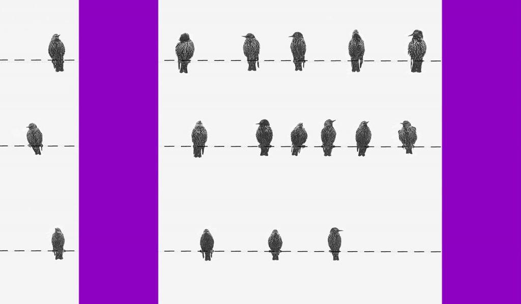 tipos de orçamento: colagem com pássaros sobre linhas pontilhadas na horizontal e colunas roxas na vertical