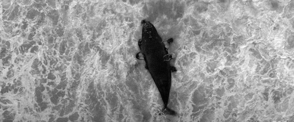Propaganda Nubank bastidores: imagem aérea de uma baleia encalhada na praia e pessoas tentando resgatá-la. Imagem criada por computação gráfica e efeitos especiais.